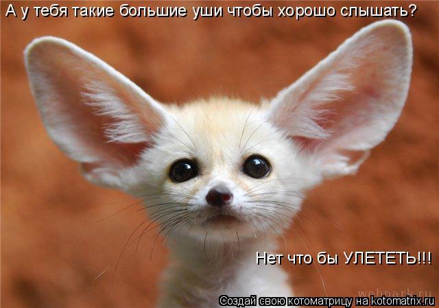 Котоматрица: А у тебя такие большие уши чтобы хорошо слышать? Нет что бы УЛЕТЕТЬ!!!