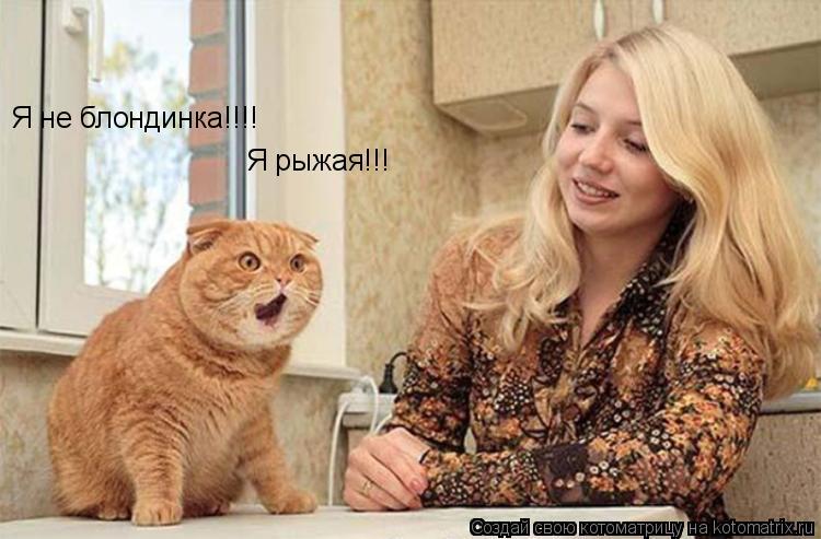Котоматрица: Я не блондинка!!!! Я рыжая!!!