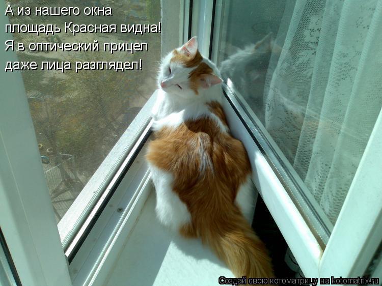 Котоматрица: А из нашего окна площадь Красная видна! Я в оптический прицел даже лица разглядел!