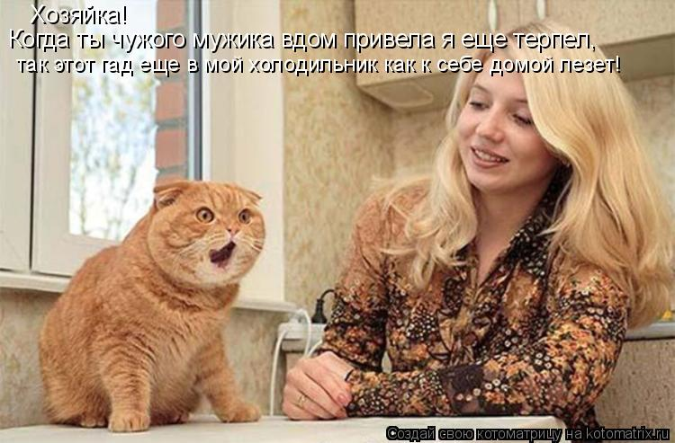 Котоматрица: Хозяйка! Когда ты чужого мужика вдом привела я еще терпел, так этот гад еще в мой холодильник как к себе домой лезет!