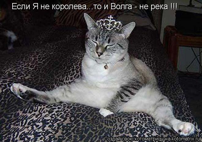 Котоматрица: Если Я не королева...то и Волга - не река !!!