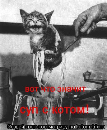 Котоматрица: вот что значит суп с котом!