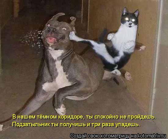 Котоматрица: В нашем тёмном коридоре, ты спокойно не пройдешь. Подзатыльник ты получишь и три раза упадешь.