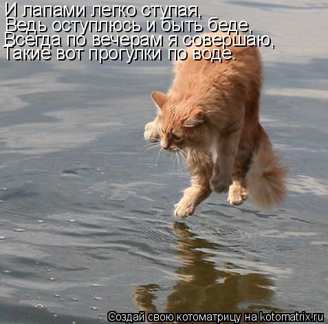 Котоматрица: И лапами легко ступая, Ведь оступлюсь и быть беде, Всегда по вечерам я совершаю, Такие вот прогулки по воде.