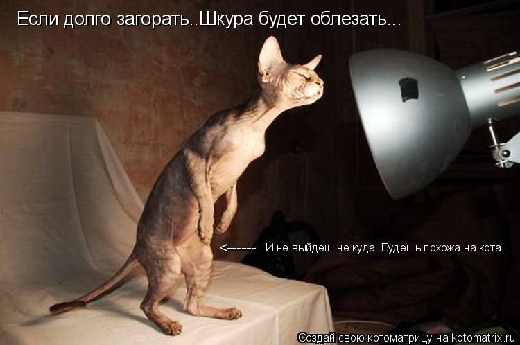 Котоматрица: Если долго загорать..Шкура будет облезать... <------ И не выйдеш не куда. Будешь похожа на кота!