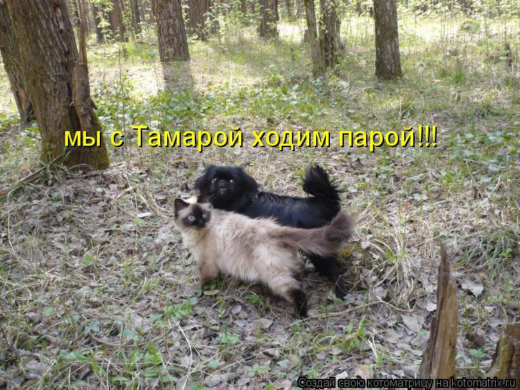 Котоматрица: мы с Тамарой ходим парой!!!