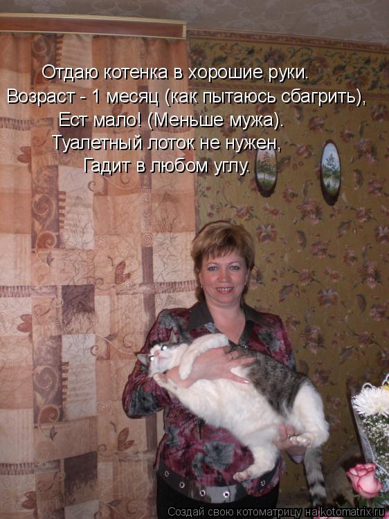 Котоматрица: Отдаю котенка в хорошие руки. Возраст - 1 месяц (как пытаюсь сбагрить), Ест мало! (Меньше мужа). Туалетный лоток не нужен, Гадит в любом углу.