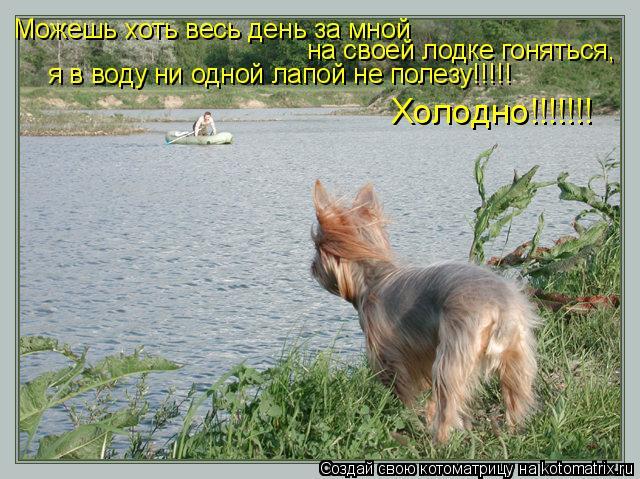 Котоматрица: Можешь хоть весь день за мной  на своей лодке гоняться,  я в воду ни одной лапой не полезу!!!!!  Холодно!!!!!!!