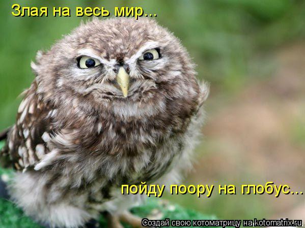 Котоматрица: Злая на весь мир...  пойду поору на глобус...