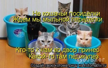 Котоматрица: Не кошачьи посиделки Ждем мы мыльной переделки Какой-то там педикулез Кто-то к нам во двор принес