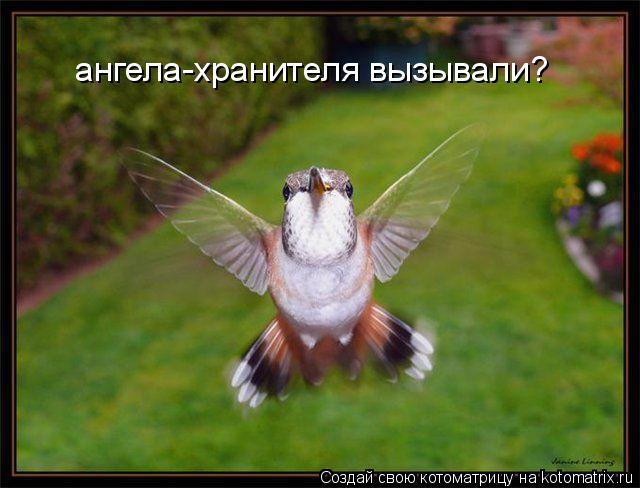 Котоматрица: ангела-хранителя вызывали?