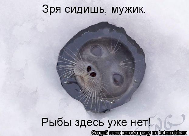 Котоматрица: Зря сидишь, мужик. Рыбы здесь уже нет!