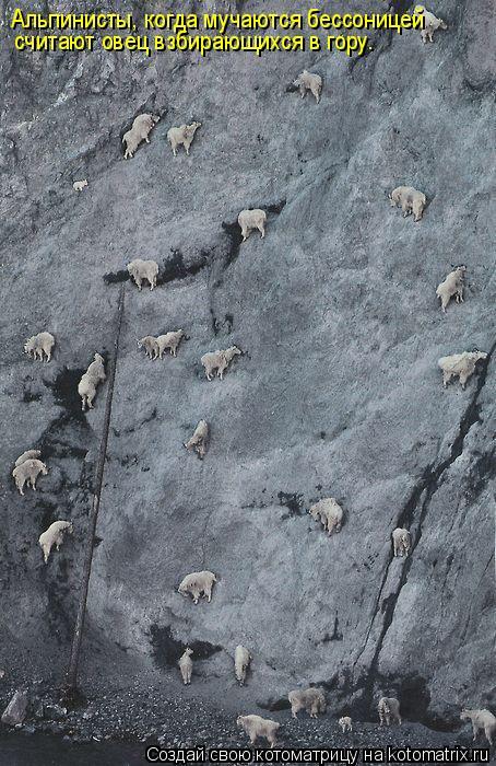 Котоматрица: Альпинисты, когда мучаются бессоницей считают овец взбирающихся в гору.