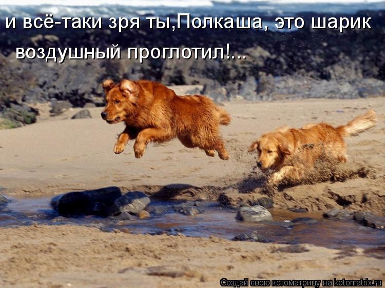 Котоматрица: и всё-таки зря ты,Полкаша, это шарик воздушный проглотил!...
