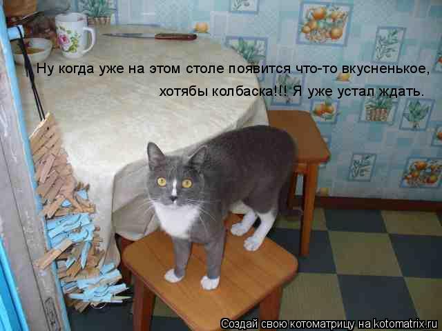 Котоматрица: Ну когда уже на этом столе появится что-то вкусненькое,  хотябы колбаска!!! Я уже устал ждать.