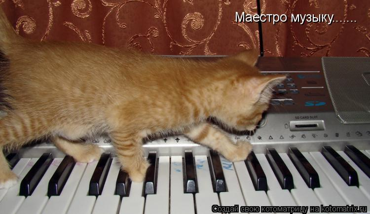 Котоматрица: Маестро музыку.......