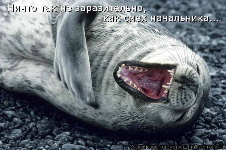 Котоматрица: Ничто так не заразительно, как смех начальника...