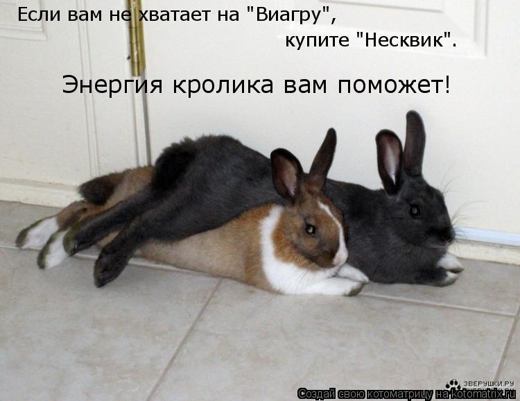 """Котоматрица: Если вам не хватает на """"Виагру"""", купите """"Несквик"""". Энергия кролика вам поможет!"""