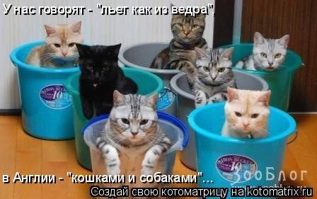 """Котоматрица: У нас говорят - """"льет как из ведра"""", в Англии - """"кошками и собаками""""..."""