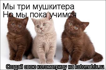 Котоматрица: Мы три мушкитера Но мы пока учимся