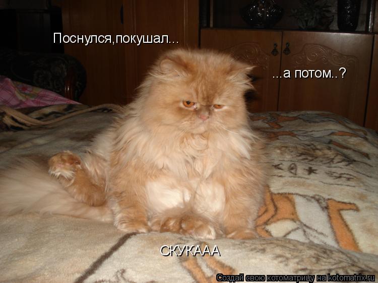 Котоматрица: Поснулся,покушал... Поснулся,покушал... ...а потом..? СКУКААА