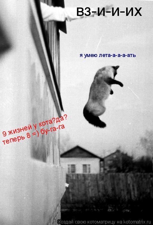 Котоматрица: я умею лета-а-а-а-ать вз-и-и-их 9 жизней у кота ?да? теперь 8 =) бу-га-га