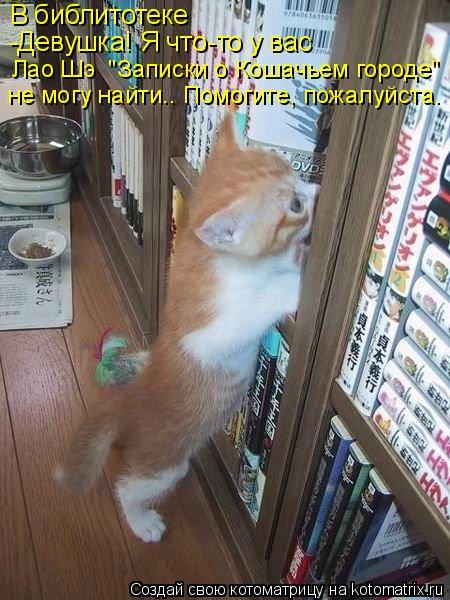 """Котоматрица: В библитотеке -Девушка! Я что-то у вас Лао Шэ  """"Записки о Кошачьем городе""""  не могу найти.. Помогите, пожалуйста."""