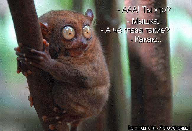 Котоматрица: - ААА! Ты хто? - ААА! Ты хто? - Мышка.. - А чё глаза такие? - Какаю..