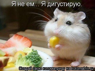 Котоматрица: Я не ем... Я дигустирую.