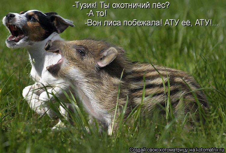 Котоматрица: -Тузик! Ты охотничий пёс? -А то! -Вон лиса побежала! АТУ её, АТУ!...