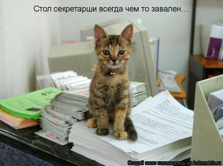 Котоматрица: Стол секретарши всегда чем то завален....