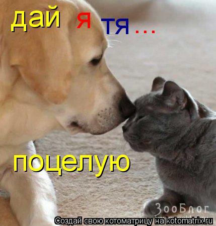 Котоматрица: дай я поцелую ... тя