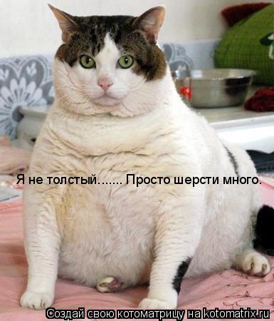 Котоматрица: Я не толстый....... Просто шерсти много.
