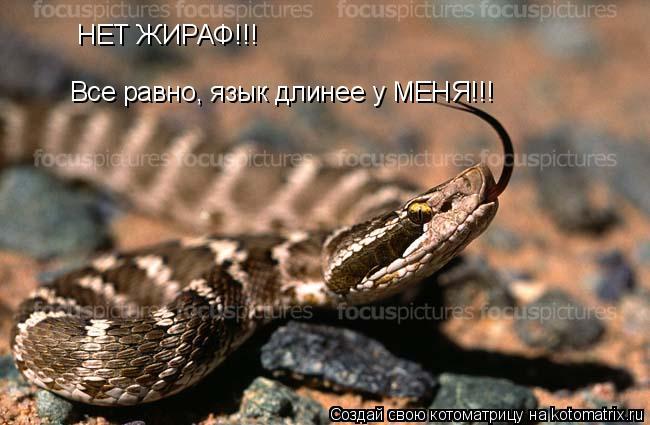 Котоматрица: НЕТ ЖИРАФ!!! Все равно, язык длинее у МЕНЯ!!!