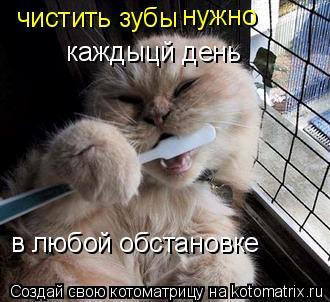 Котоматрица: чистить зубы  нужно каждыцй день в любой обстановке