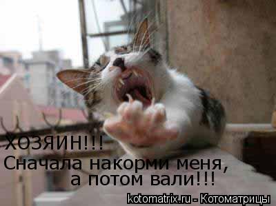 Котоматрица: ХОЗЯИН!!! Сначала накорми меня, а потом вали!!!