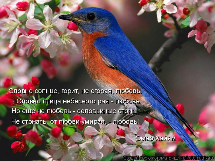 Котоматрица: Словно солнце, горит, не сгорая, любовь. Словно птица небесного рая - любовь. Но еще не любовь - соловьиные стоны. Не стонать, от любви умирая, -