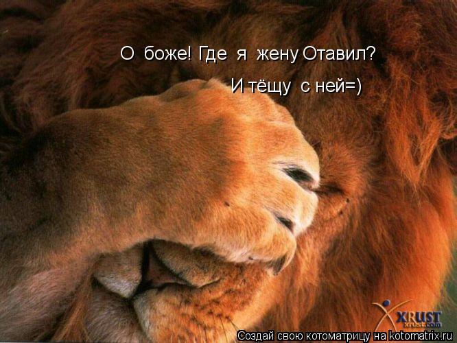 Котоматрица: О  боже! Где  я  жену Отавил? И тёщу  с ней=)