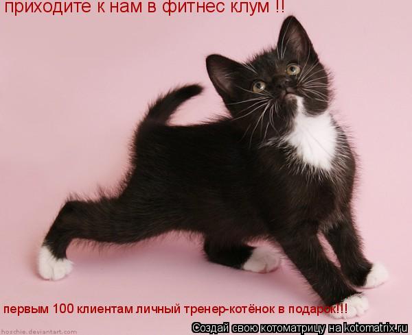 Котоматрица: приходите к нам в фитнес клум !! первым 100 клиентам личный тренер-котёнок в подарок!!!