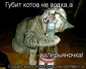 Котоматрица: Губит котов не водка,а  валерьяночка!