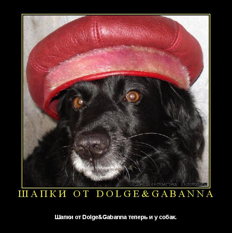 Котоматрица: Шапки от Dolge&Gabanna Шапки от Dolge&Gabanna теперь и у собак.