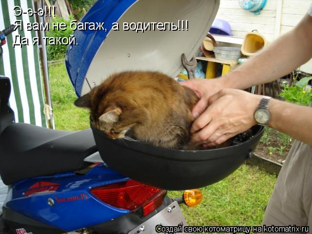 Котоматрица: Э-э-э!!! Я вам не багаж, а водитель!!! Да я такой.