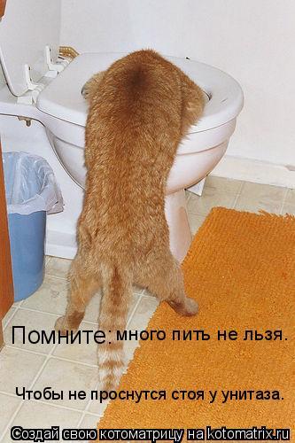 Котоматрица: Помните: много пить не льзя. Чтобы не проснутся стоя у унитаза.