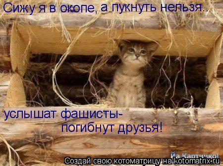 Котоматрица: Сижу я в окопе, а пукнуть нельзя.. услышат фашисты- погибнут друзья!