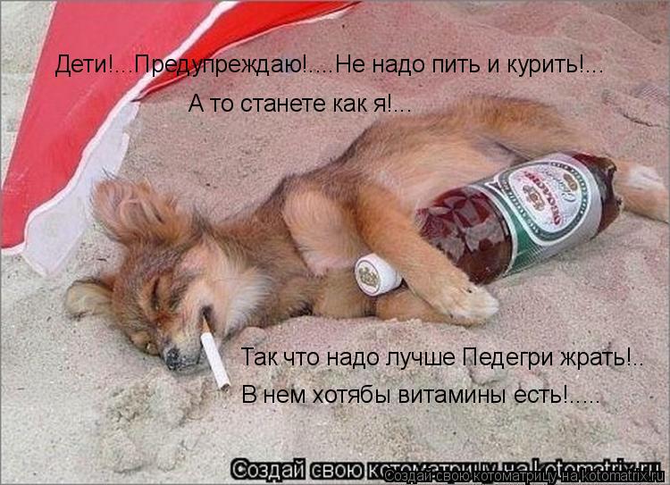 Котоматрица: Дети!...Предупреждаю!....Не надо пить и курить!... А то станете как я!... Так что надо лучше Педегри жрать!.. В нем хотябы витамины есть!.....