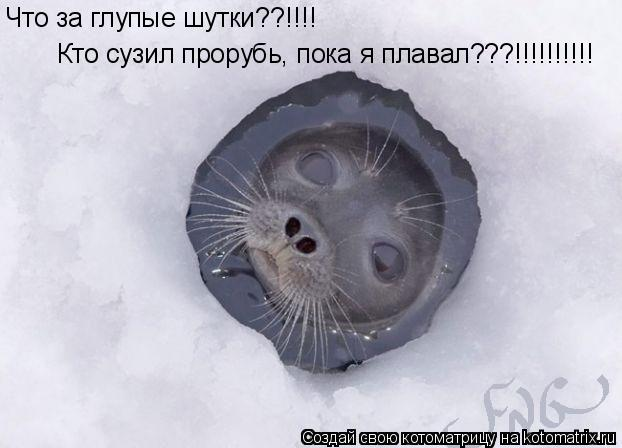 Котоматрица: Что за глупые шутки??!!!! Кто сузил прорубь, пока я плавал???!!!!!!!!!!