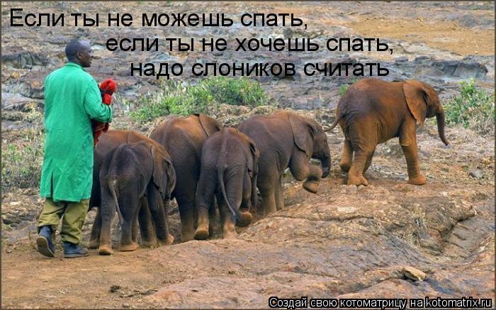 Котоматрица: Если ты не можешь спать, если ты не хочешь спать, надо слоников считать