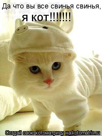 Котоматрица: Да что вы все свинья свинья, я кот!!!!!!!
