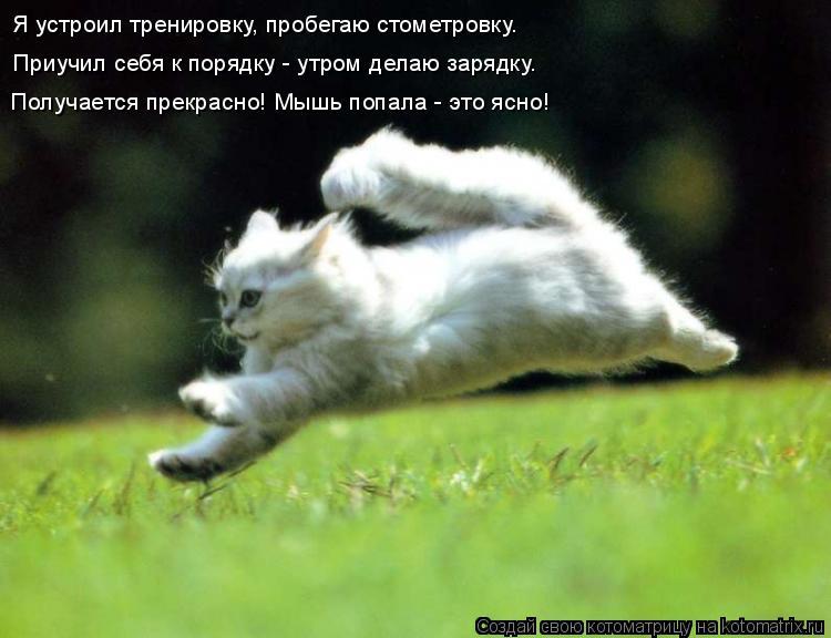 Котоматрица: Я устроил тренировку, пробегаю стометровку. Приучил себя к порядку - утром делаю зарядку. Получается прекрасно! Мышь попала - это ясно!