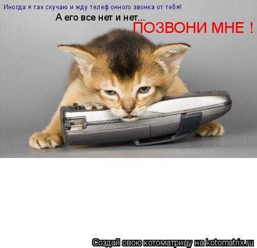 Котоматрица: Иногда я так скучаю и жду телефонного звонка от тебя!   А его все нет и нет... ПОЗВОНИ МНЕ !